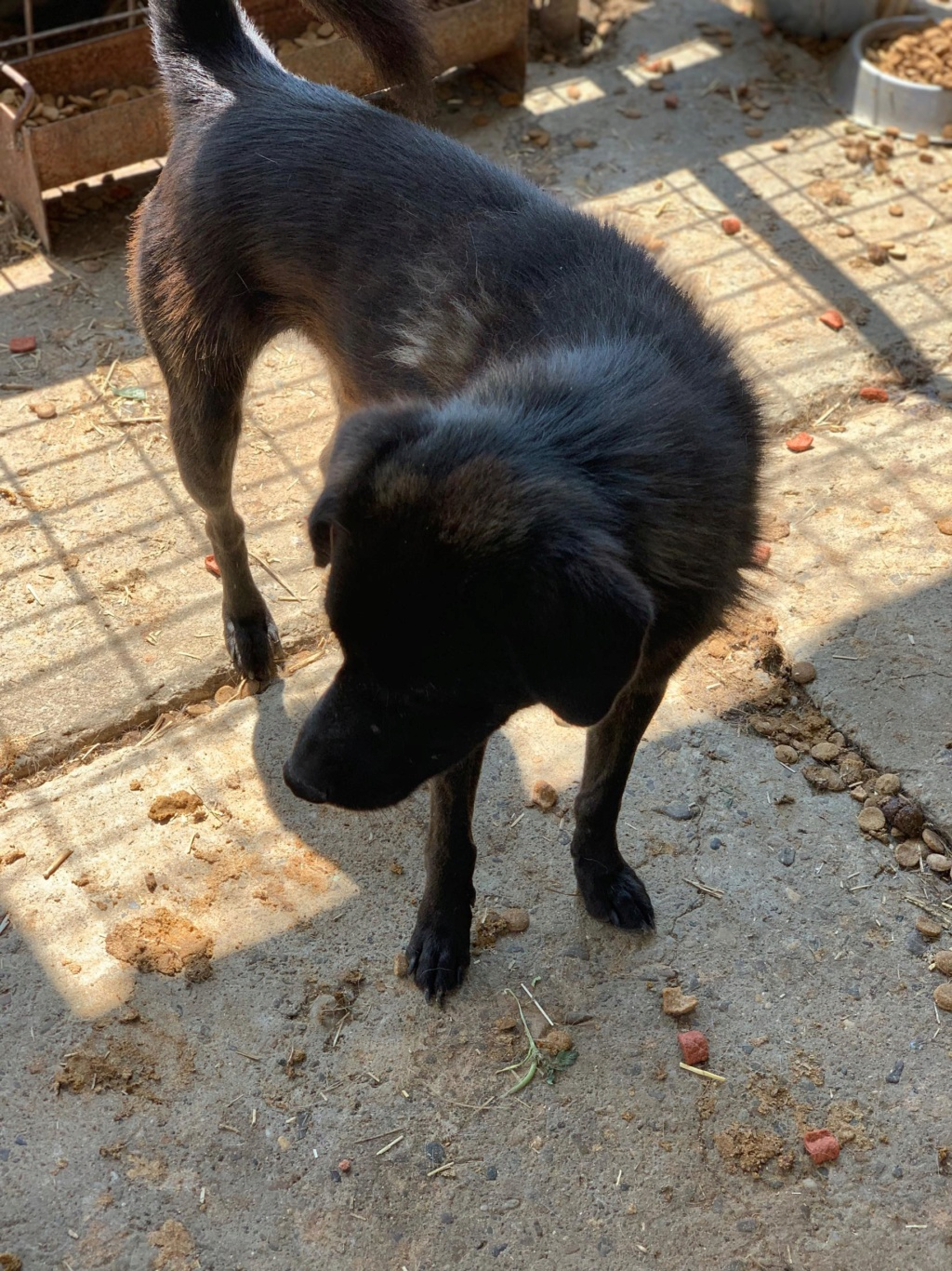 Black Onyx - mâle - fourrière de Târgu Frumos 67910110