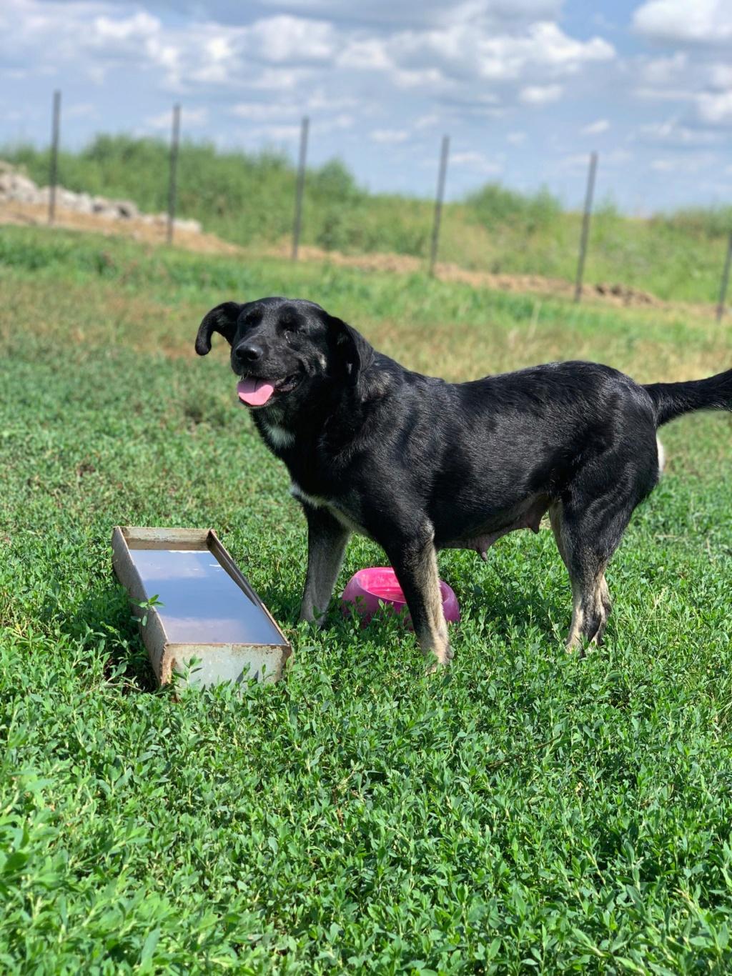 Daïka- femelle- fourrière de Târgu Frumos 67912110