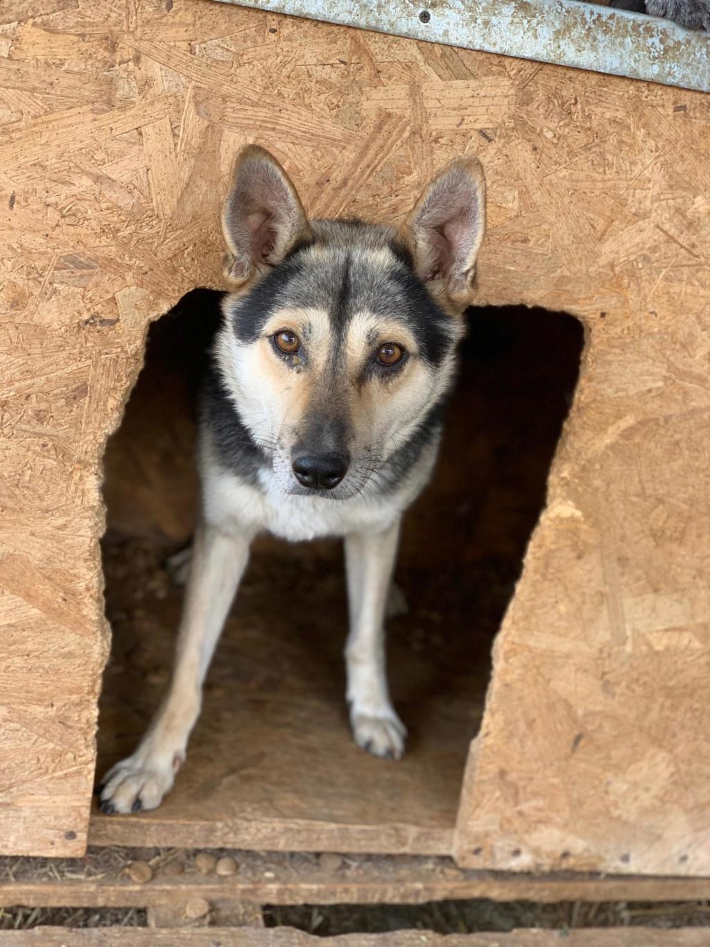 Kodack - mâle - fourrière de Târgu Frumos - réservé adoption 25 67965210