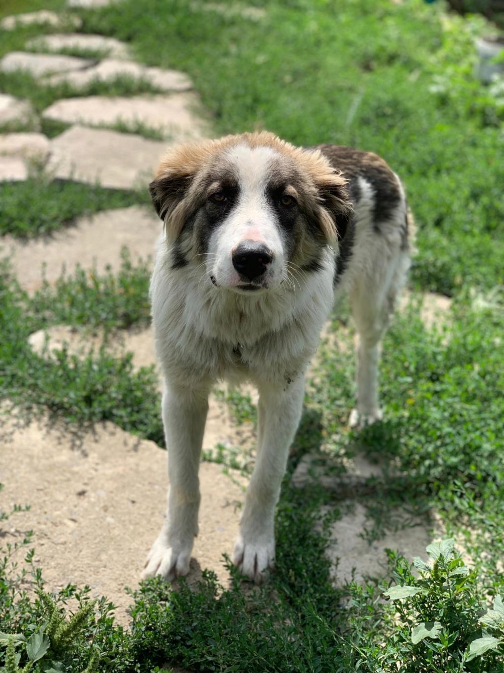 Caporal - mâle - fourrière de Târgu Frumos adopté via andreea 68244310