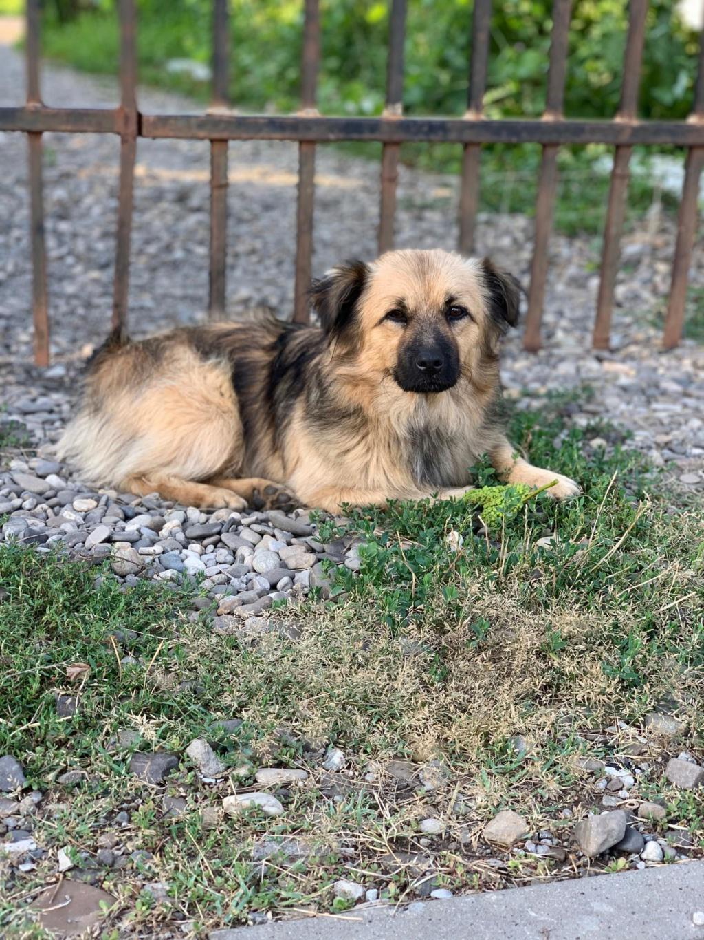 Berlioz - Berlioz - mâle - à la rue Târgu Frumos - adoptée via Andreea 68296110