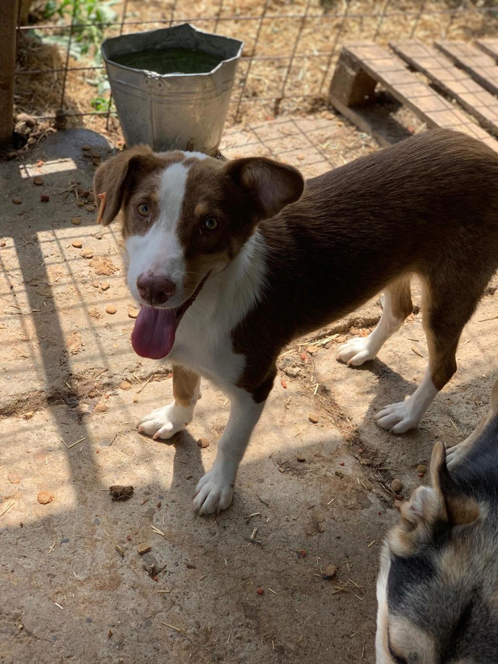 Maya - femelle - fourrière de Târgu Frumos - en famille d'accueil dans le 67 - réservée adoption (68) 68540410
