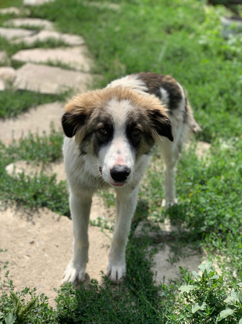 Caporal - mâle - fourrière de Târgu Frumos adopté via andreea 68561510