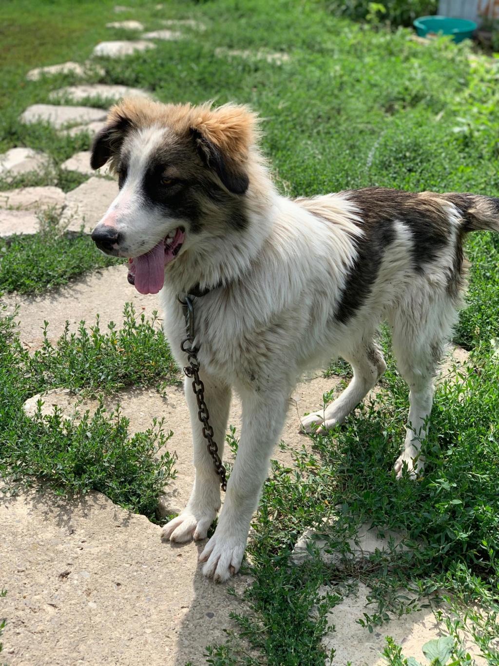 Caporal - mâle - fourrière de Târgu Frumos adopté via andreea 68607210