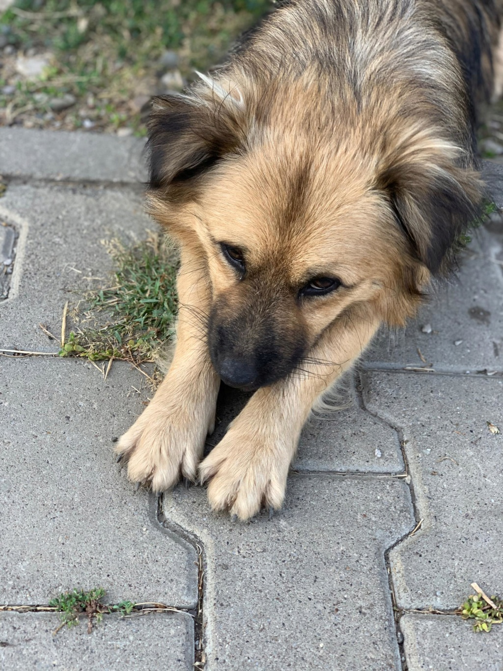 Berlioz - Berlioz - mâle - à la rue Târgu Frumos - adoptée via Andreea 68755710