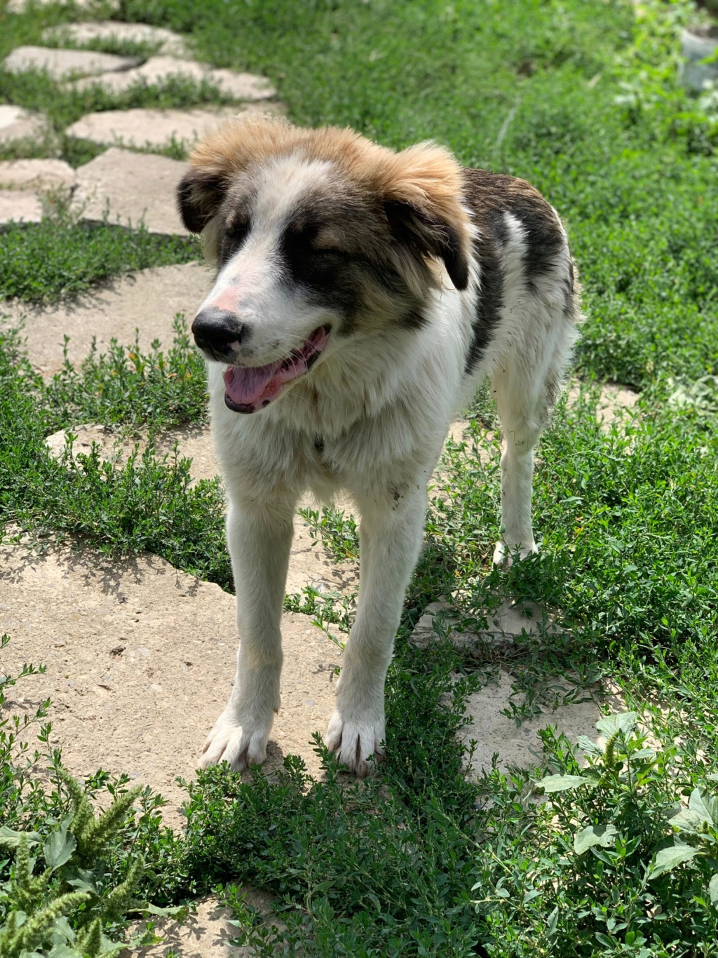 Caporal - mâle - fourrière de Târgu Frumos adopté via andreea 69076310