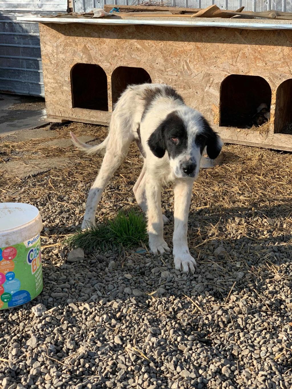 Onyx- mâle- fourrière de Târgu Frumos  adopté via andreea 69909710