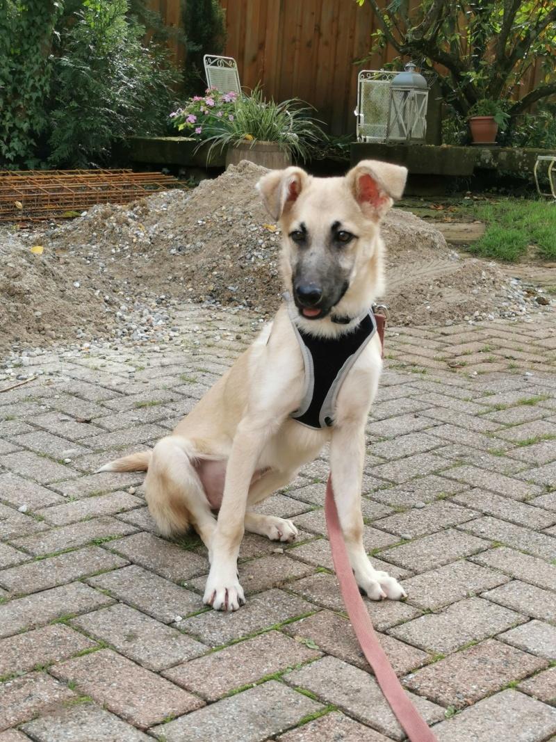Rianna- femelle- fourrière de Târgu Frumos - sera en famille d'accueil dans le 67 en octobre 71929610