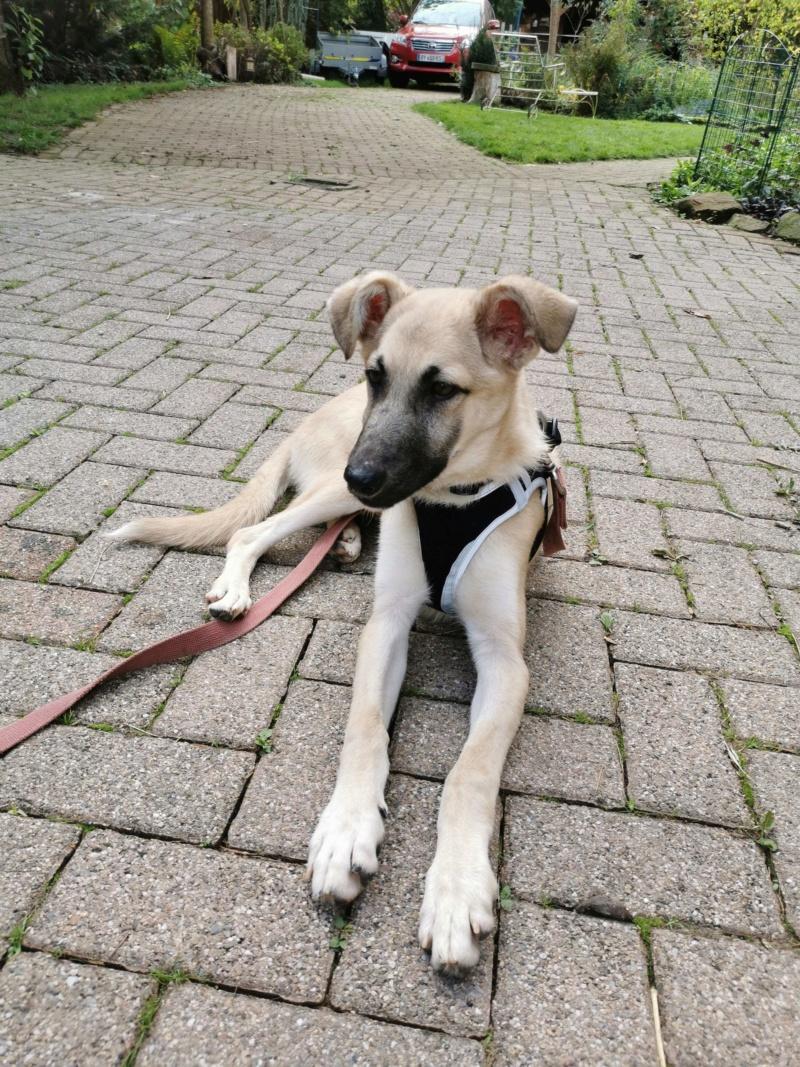 Rianna- femelle- fourrière de Târgu Frumos - sera en famille d'accueil dans le 67 en octobre 72114610
