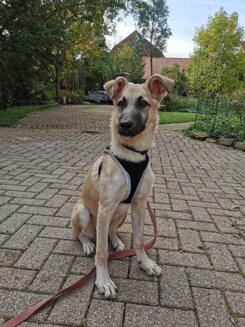 Rianna- femelle- fourrière de Târgu Frumos - sera en famille d'accueil dans le 67 en octobre 72221310