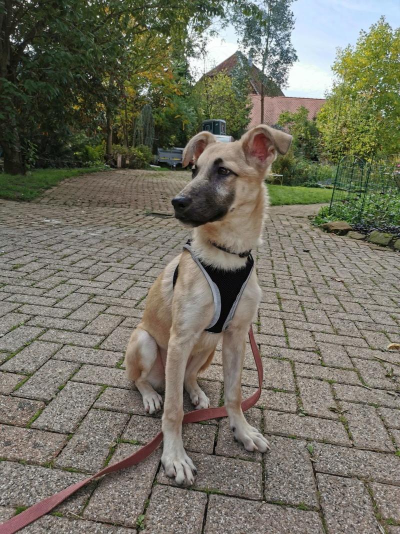 Rianna- femelle- fourrière de Târgu Frumos - sera en famille d'accueil dans le 67 en octobre 72268810