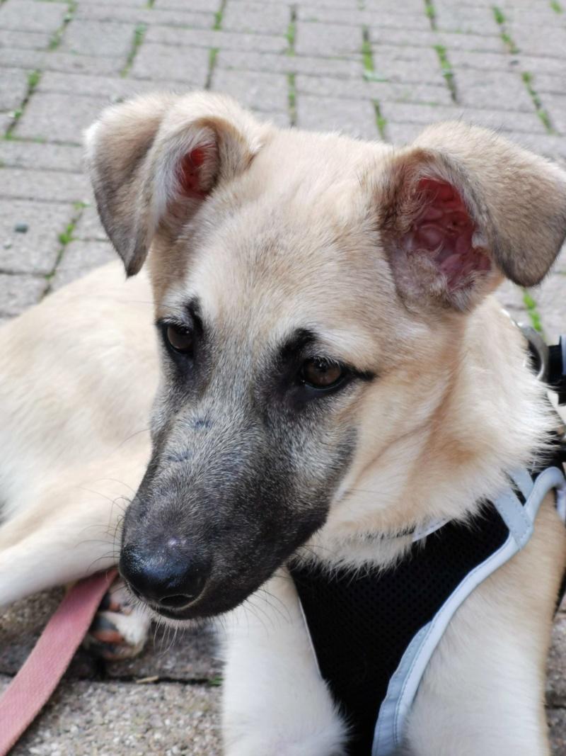 Rianna- femelle- fourrière de Târgu Frumos - sera en famille d'accueil dans le 67 en octobre 72370510