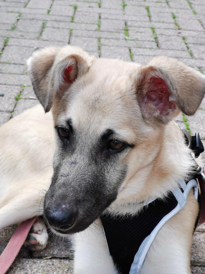 Rianna- femelle- fourrière de Târgu Frumos - sera en famille d'accueil dans le 67 en octobre 72568510