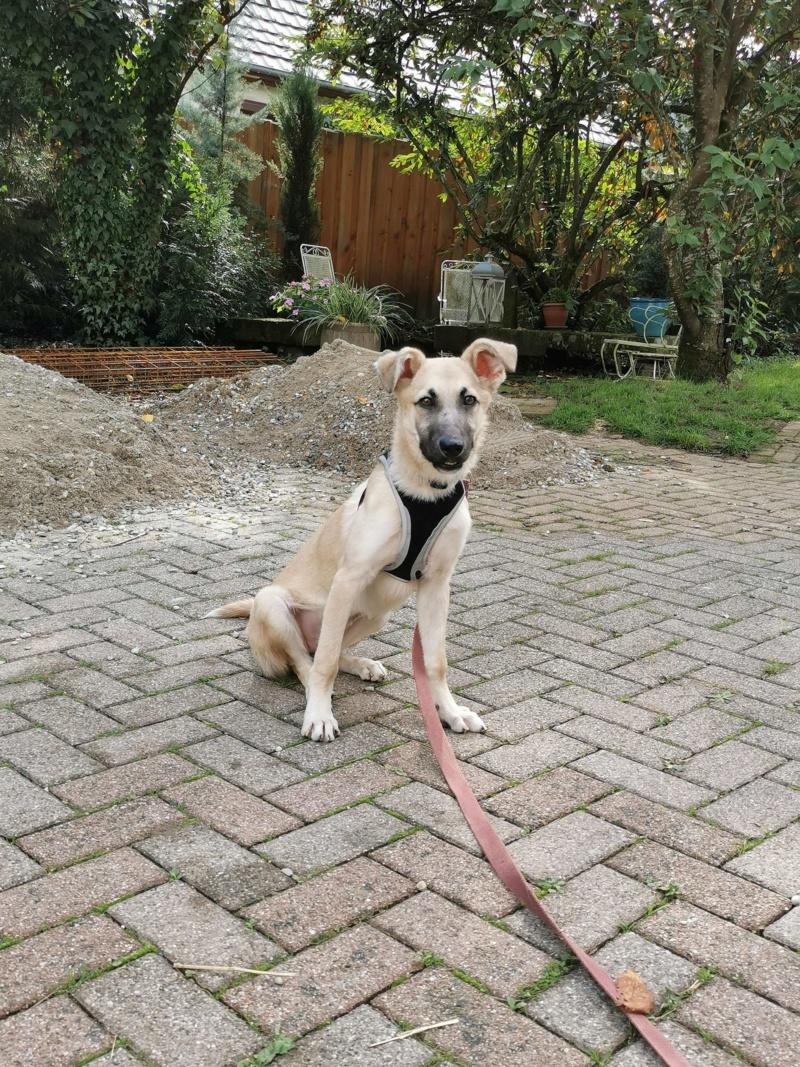 Rianna- femelle- fourrière de Târgu Frumos - sera en famille d'accueil dans le 67 en octobre 72577110