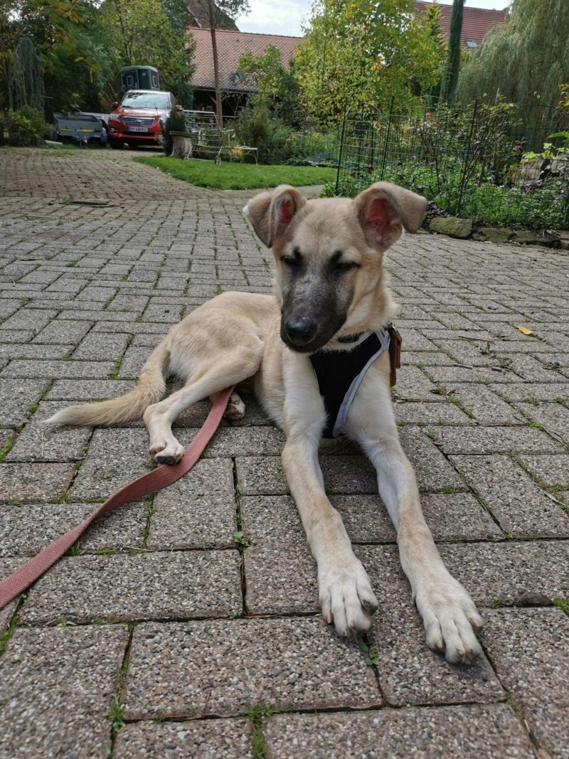 Rianna- femelle- fourrière de Târgu Frumos - sera en famille d'accueil dans le 67 en octobre 72841410