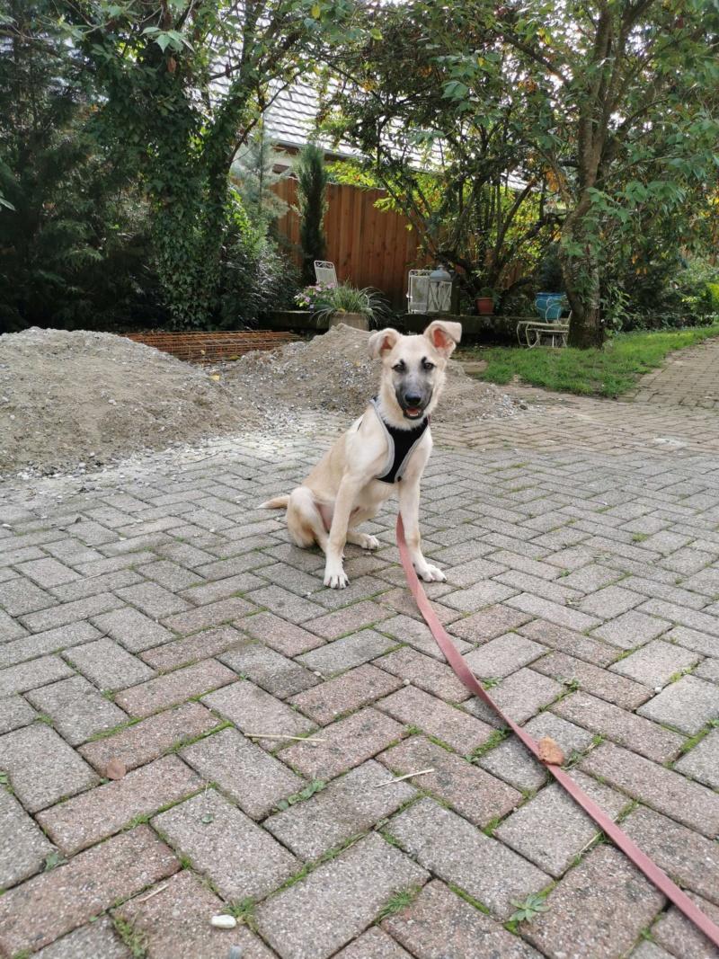 Rianna- femelle- fourrière de Târgu Frumos - sera en famille d'accueil dans le 67 en octobre 72889210