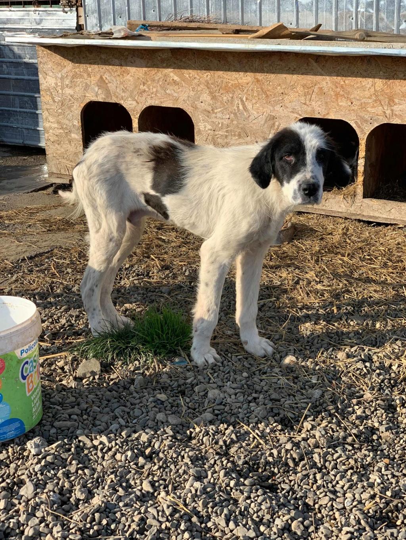Onyx- mâle- fourrière de Târgu Frumos  adopté via andreea 75241210