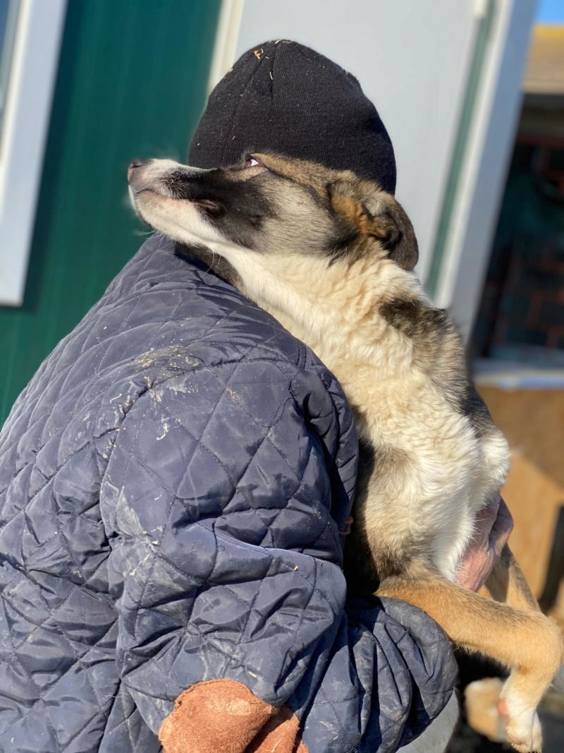 Soura- femelle- fourrière de Târgu Frumos- réservé adoption (67)  84634310