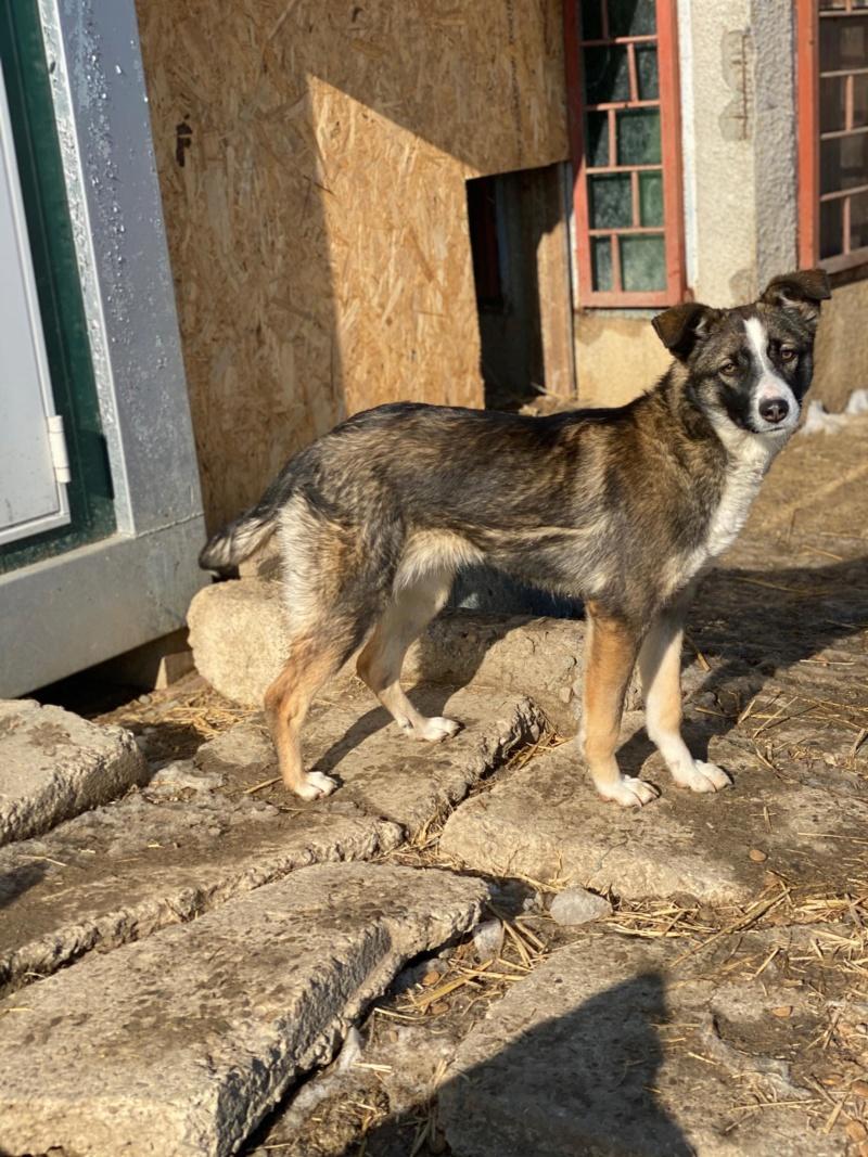 Soura- femelle- fourrière de Târgu Frumos- réservé adoption (67)  84780110