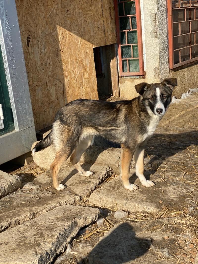 Soura- femelle- fourrière de Târgu Frumos- réservé adoption (67)  84789710