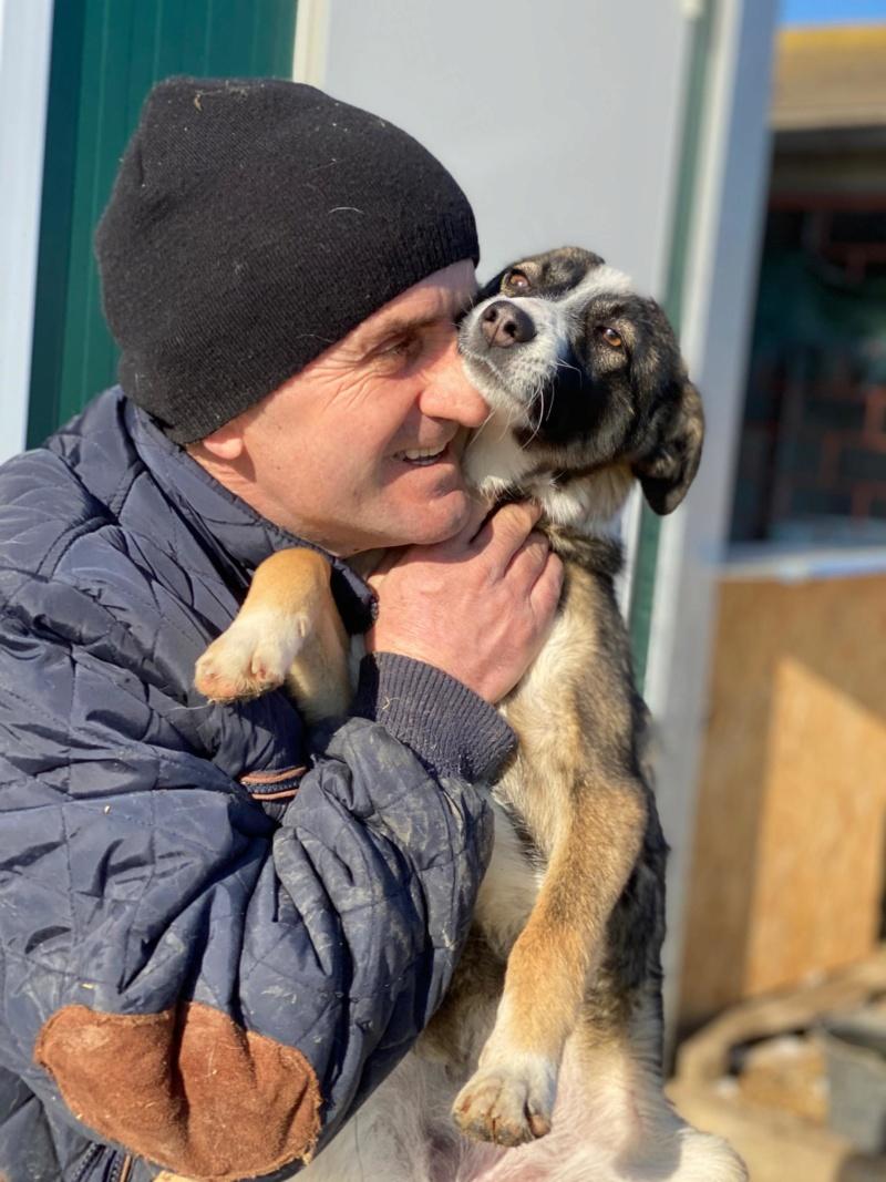Soura- femelle- fourrière de Târgu Frumos- réservé adoption (67)  85079110