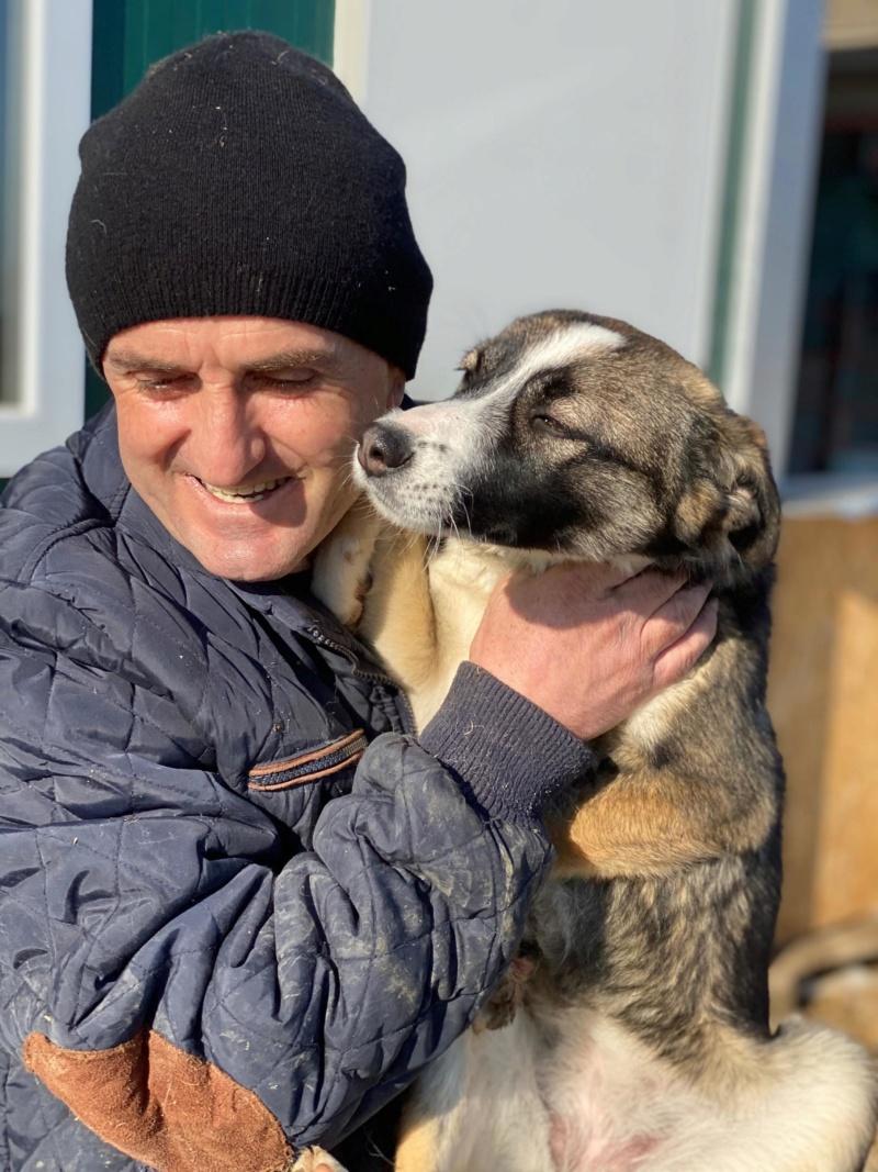 Soura- femelle- fourrière de Târgu Frumos- réservé adoption (67)  85096710