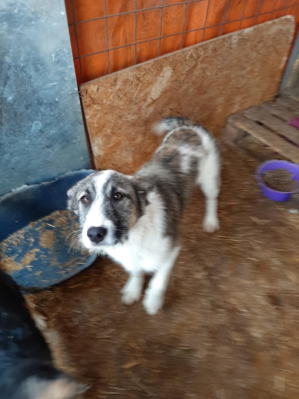 Belle- femelle- fourrière de Târgu Frumos 91499410