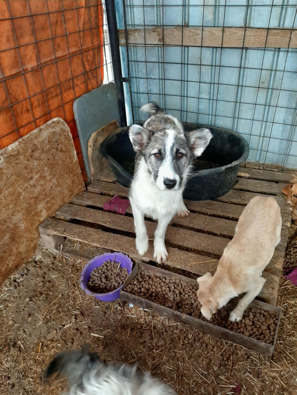Belle- femelle- fourrière de Târgu Frumos 91499411