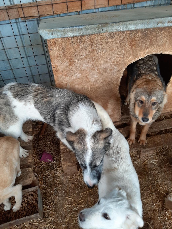 Belle- femelle- fourrière de Târgu Frumos - Réservée adoption (67) 91538410