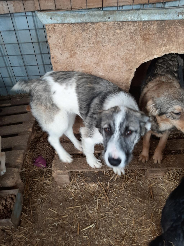 Belle- femelle- fourrière de Târgu Frumos - Réservée adoption (67) 91652610