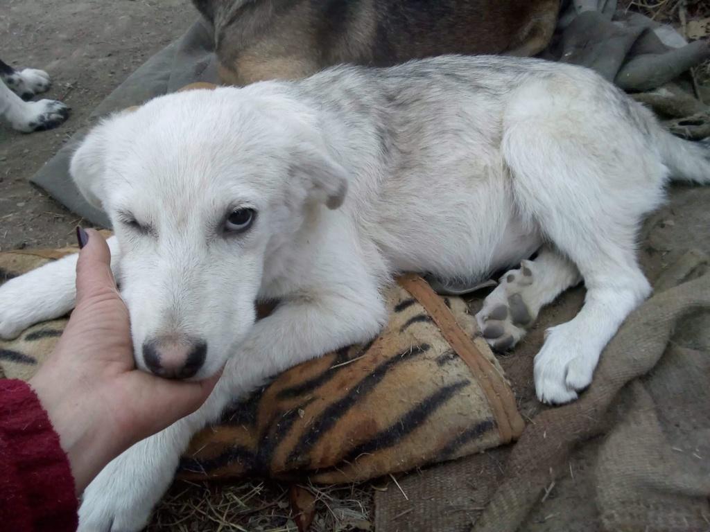 Alaska - femelle - Târgu Frumos - réservé adoption (68) Alaska10