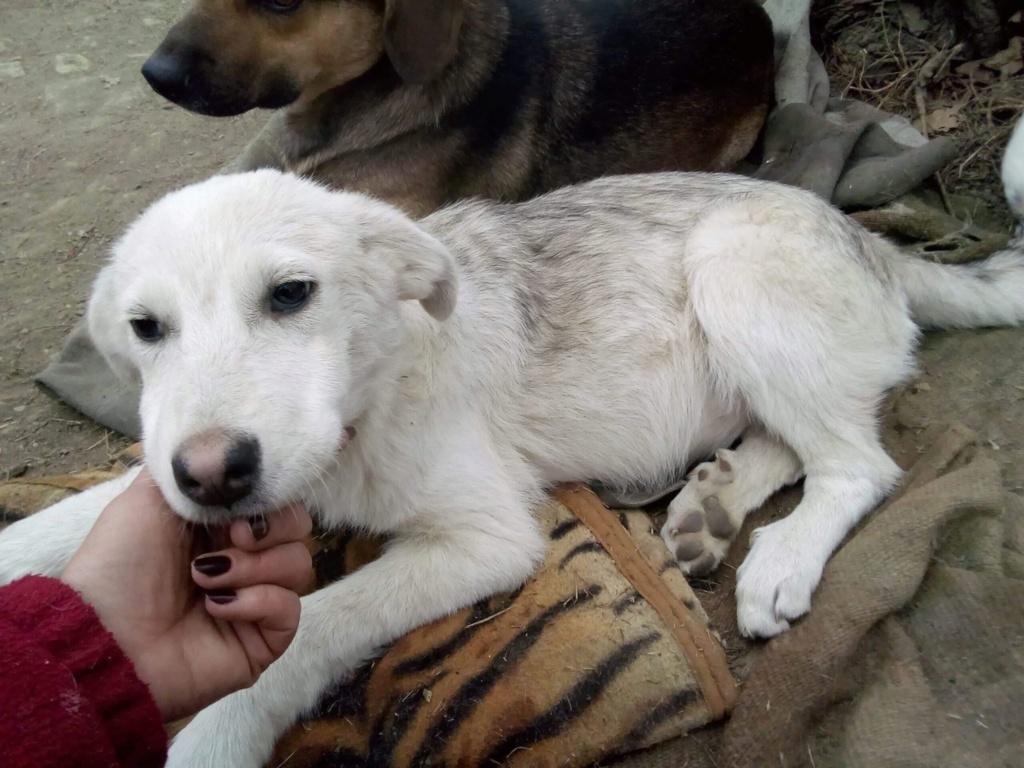 Alaska - femelle - Târgu Frumos - réservé adoption (68) Alaska12