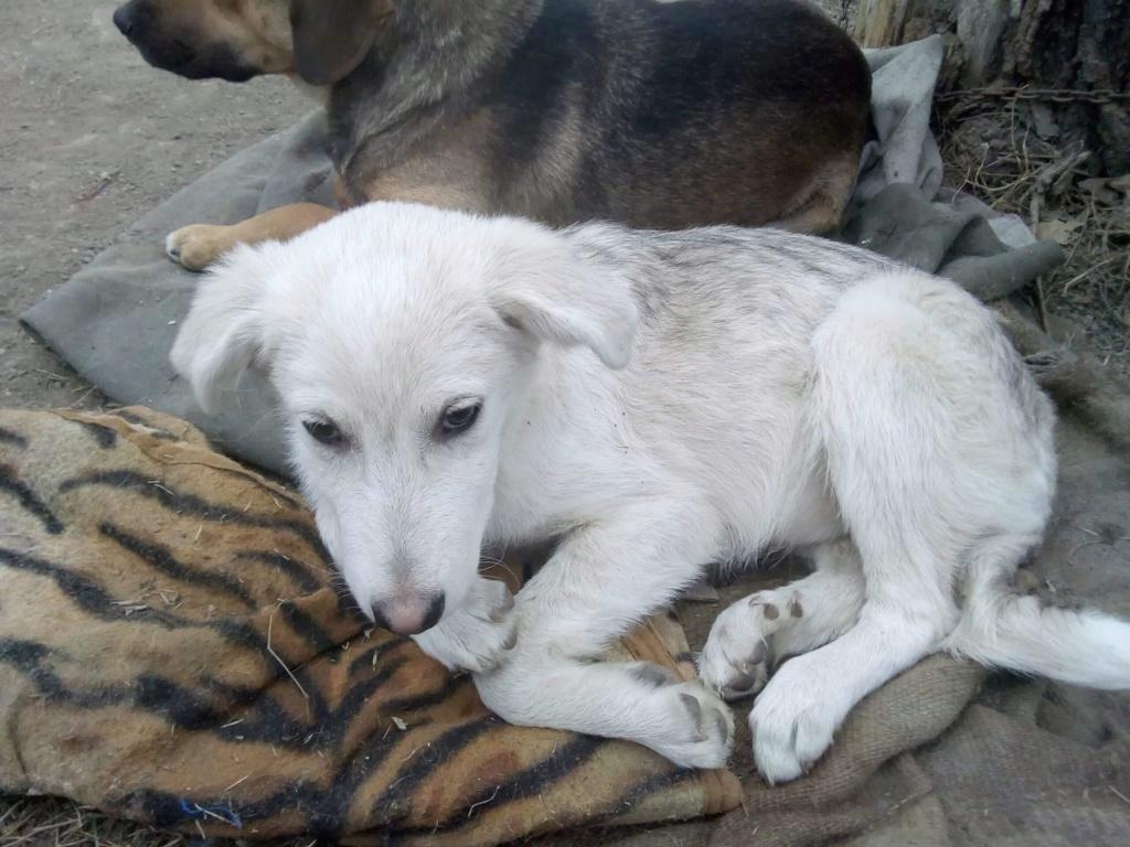 Alaska - femelle - Târgu Frumos - réservé adoption (68) Alaska13