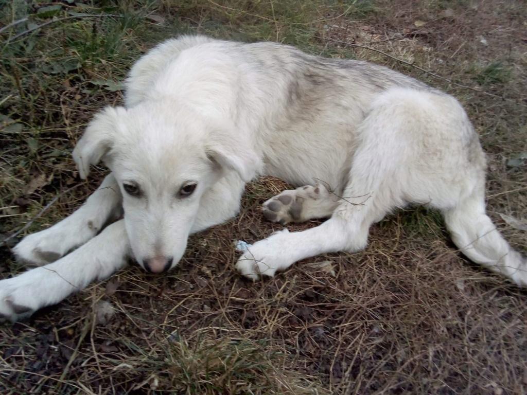 Alaska - femelle - Târgu Frumos - réservé adoption (68) Alaska15