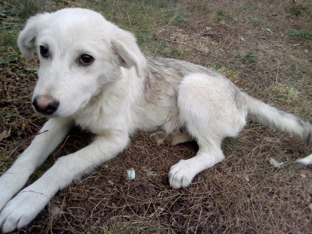 Alaska - femelle - Târgu Frumos - réservé adoption (68) Alaska21