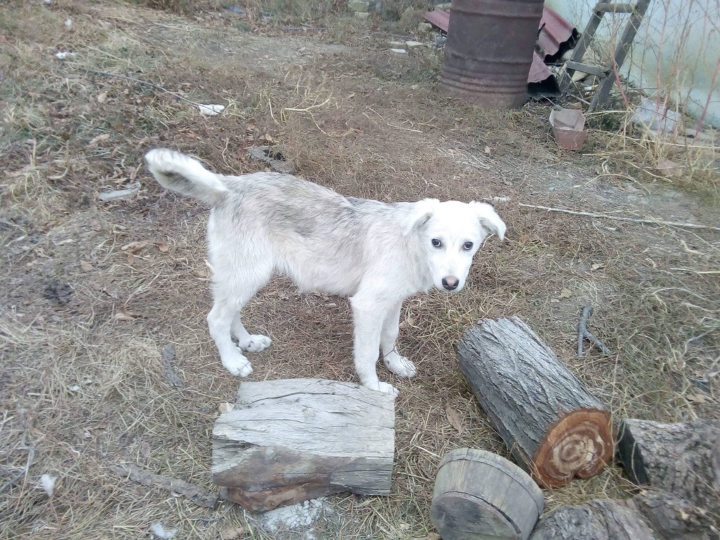 Alaska - femelle - Târgu Frumos - réservé adoption (68) Alaska22