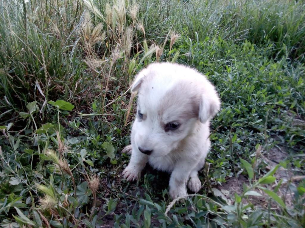 Alaska - femelle - Târgu Frumos - réservé adoption (68) Alsaka13
