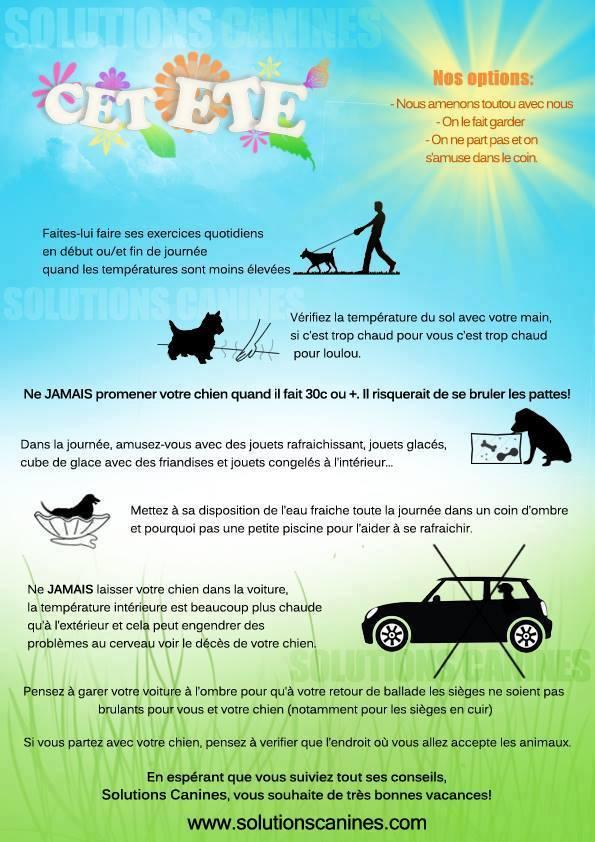 Veille documentaire : éthologie, éducation positive et comportement du chien Chaleu10