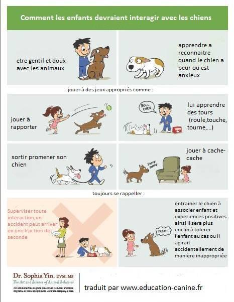 Veille documentaire : éthologie, éducation positive et comportement du chien Chien_10