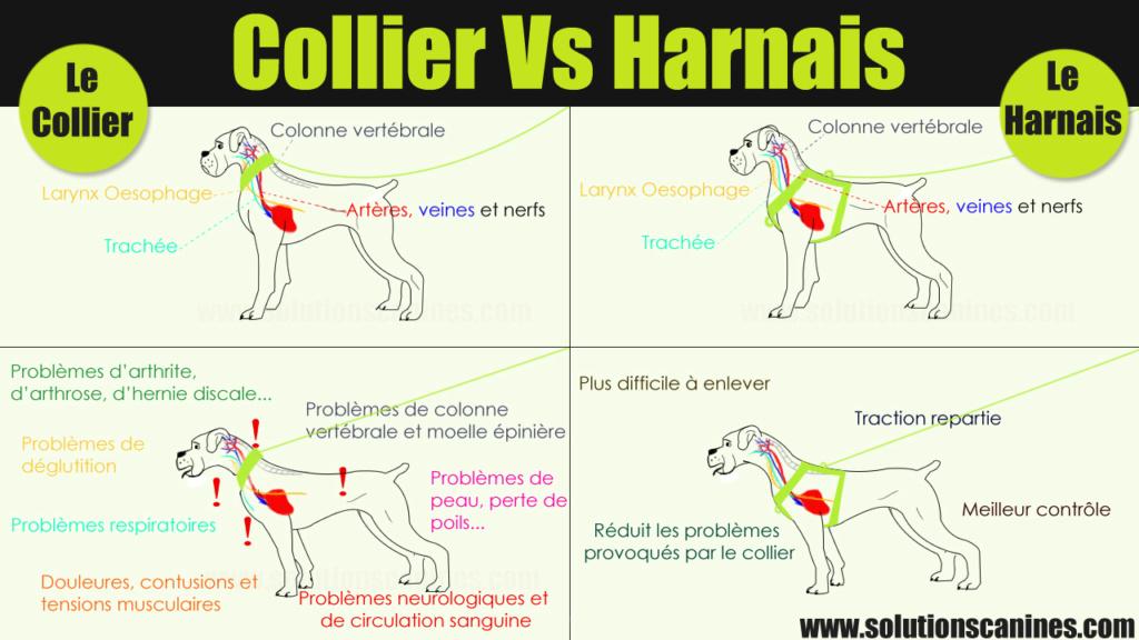 Veille documentaire : éthologie, éducation positive et comportement du chien Collie10
