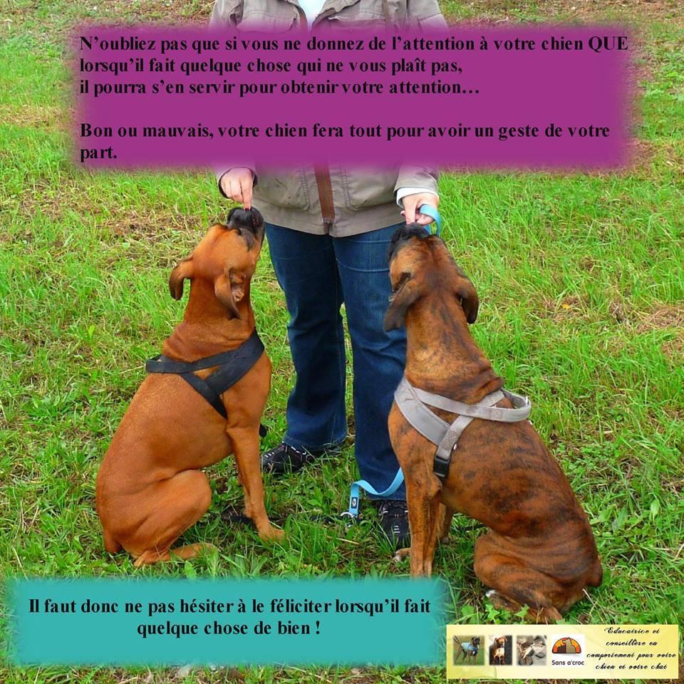 Veille documentaire : éthologie, éducation positive et comportement du chien Compor11