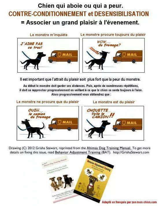 Veille documentaire : éthologie, éducation positive et comportement du chien Contre10