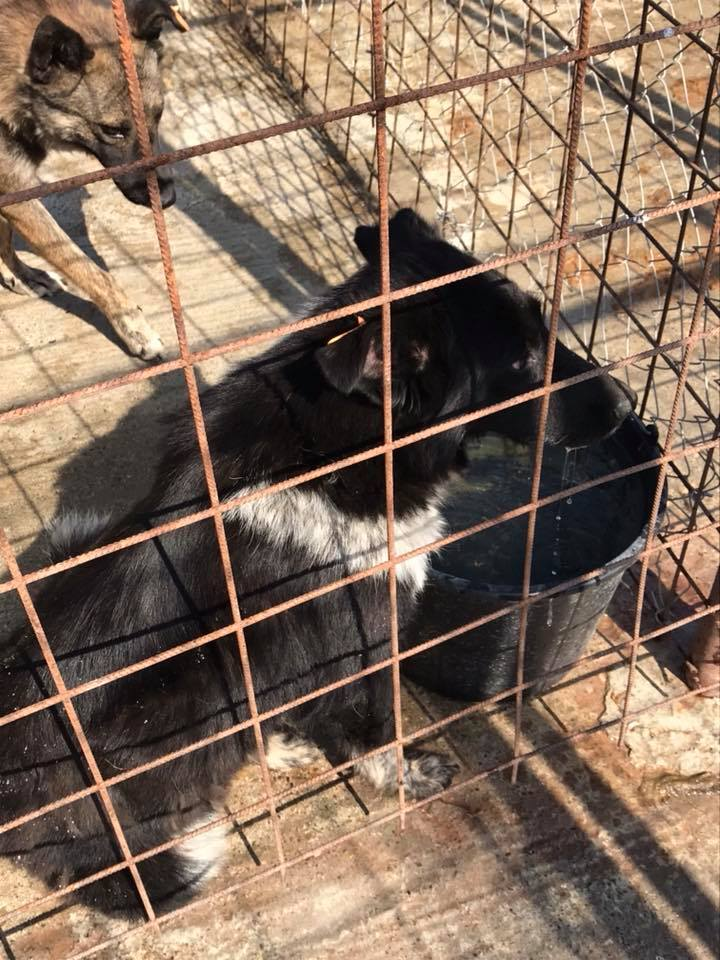 Dakota - femelle - fourrière de Târgu Frumos - Réservée adoption (88) Dakota14