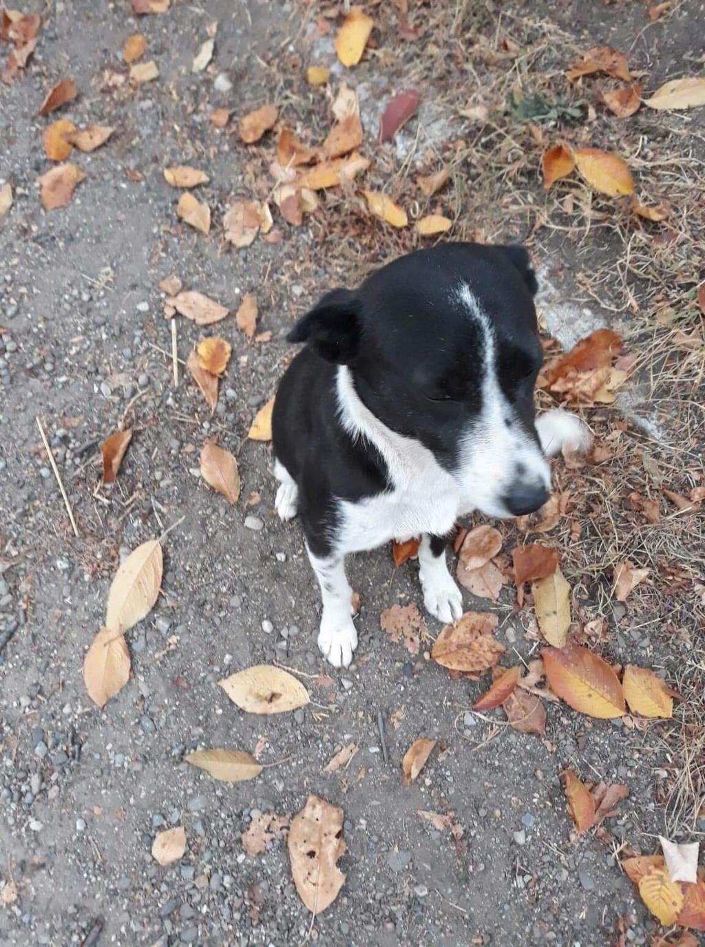 Dixie - femelle - chez Andreea à Târgu Frumos - réservée adoption (67) Dixie_12