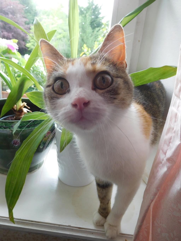 Clafoutis - chatte femelle - adoptée par sa FA (67) Dscn5621