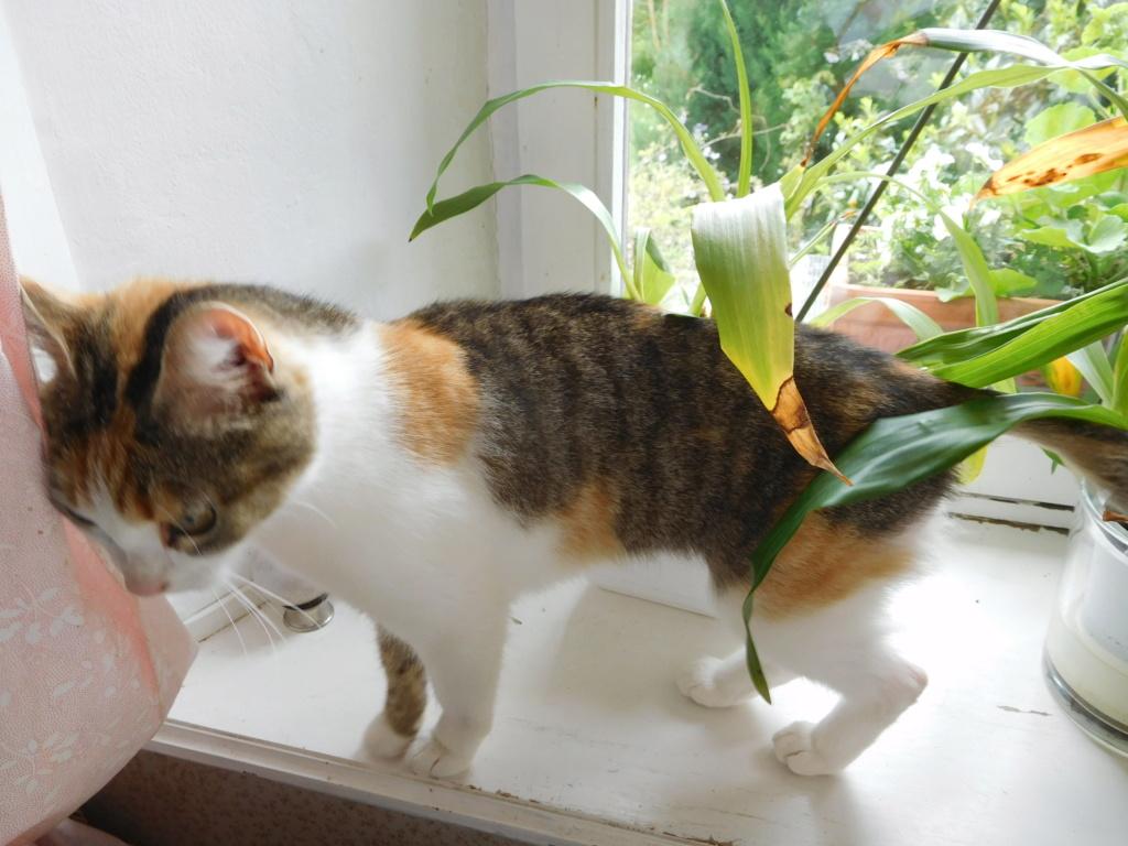 Clafoutis - chatte femelle - adoptée par sa FA (67) Dscn5624