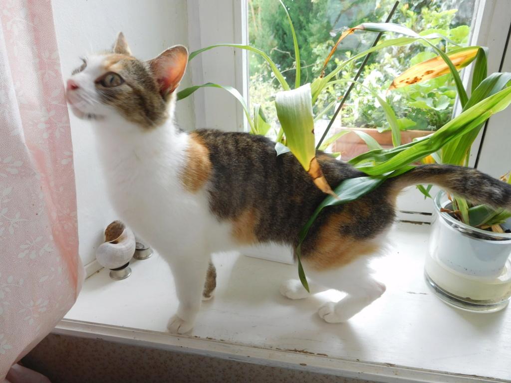 Clafoutis - chatte femelle - adoptée par sa FA (67) Dscn5625