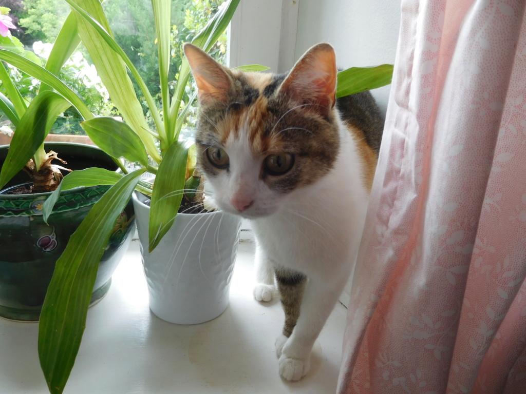 Clafoutis - chatte femelle - adoptée par sa FA (67) Dscn5626