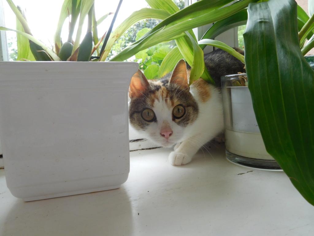 Clafoutis - chatte femelle - adoptée par sa FA (67) Dscn5628