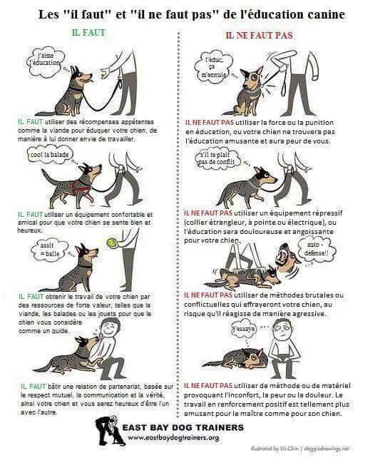 Veille documentaire : éthologie, éducation positive et comportement du chien Educ_p10